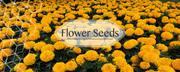 Buy garden seeds online in India | Biocarve