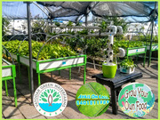 Hydroponics and Aquaponics system to grow own food